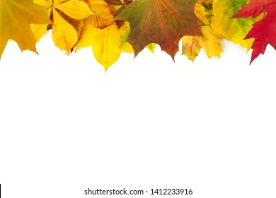 Natural autumn foliage isolated on white background. Seasonal decoration and design concept.
