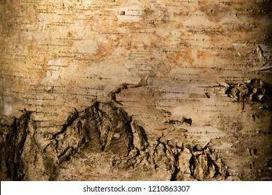 the natural background - birch bark