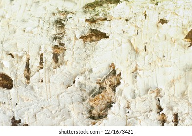 Natural background of birch bark with natural birch texture. Beautiful white birch trees in spring.