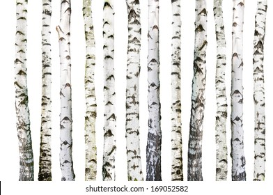 natural background - birch - wallpaper