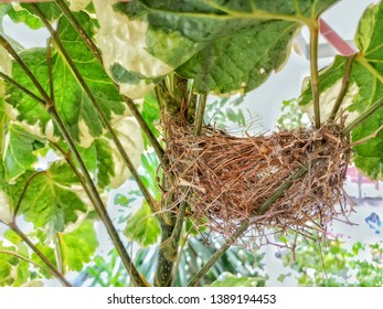 Natural background with bird's nest on the tree