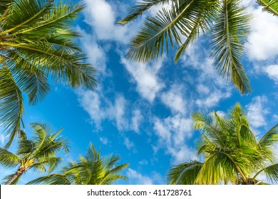 Natural  background from Boracay island with coconut palms tree leafs, blue sky and clouds  Travel Vacation