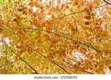 Natural background - colorful leaves. Leafy tree.