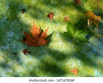 Natural background of the coming autumn with fallen maple leaves on the water and beautiful sunlight