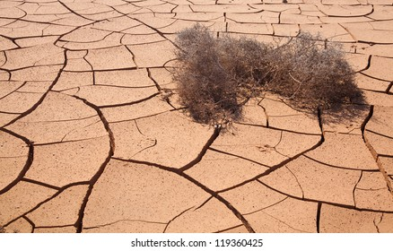 Natural background of cracked earth with dry tumbleweed plant