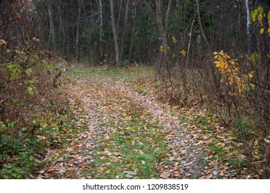 the natural background - Fall in the wood situated near Moscow