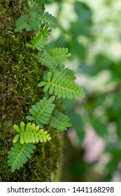 Natural Background of Fern, Moss and Green Soft Focused Leaves Close Up ~NATURE'S TEXTURES~