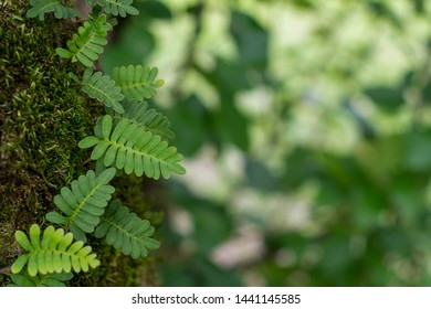 Natural Background of Fern and Moss on a Tree, Textured Green Leaves in a  Soft Focused Layout with Copy Space ~NATURE'S TEXTURES~