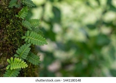 Natural Background of Fern, Moss and Textured Green Leaves in the Forest with Soft Focused Copy Space ~NATURE'S TEXTURES~