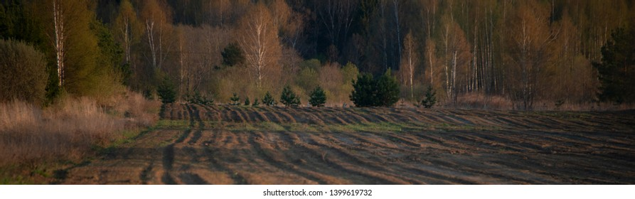 the natural background - field and forest