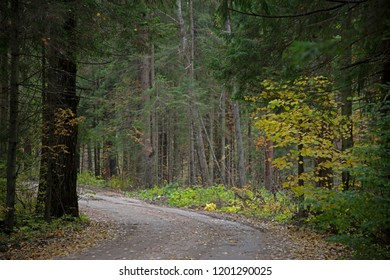 the natural background - Forest road