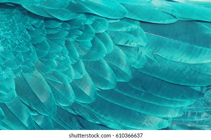 Natural background of  fragment of the wing  feathers of a parrot closeup of a bright color.