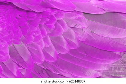 Natural background of a fragment of the wing  feathers of a parrot closeup of pink color