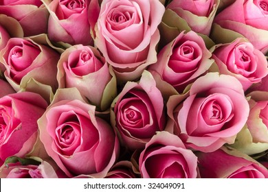 Natural background of fresh roses. Soft focus.