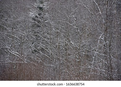 the natural background  of frost forest in winter