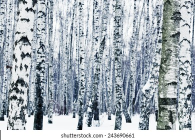 natural background from frozen birchwood in winter