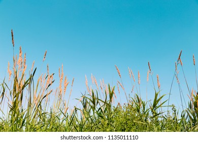 Natural background with green grass flower and blue sky