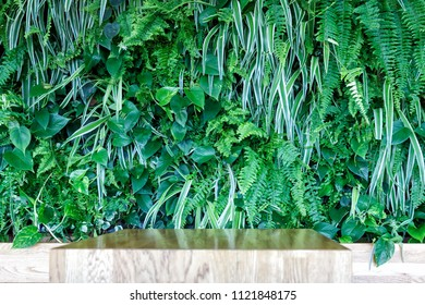Natural background from green leaf plants stand for any subject.
