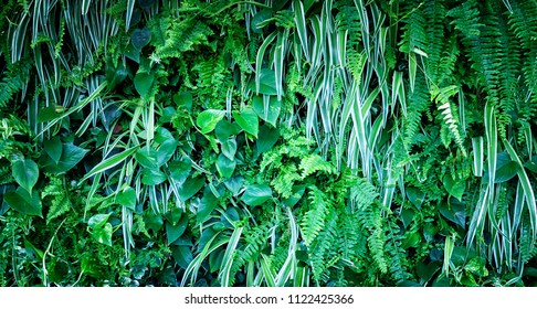 Natural background from green leaf plants.