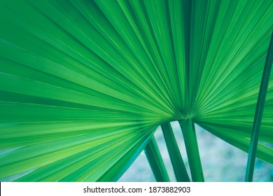 Natural background of green leaves. - image