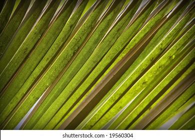 Natural background. Green palm leaf 07
