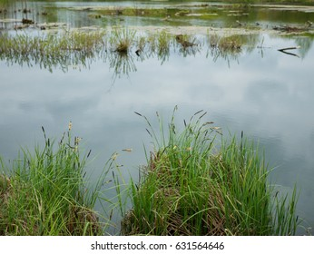 Natural background of green reeds.close up