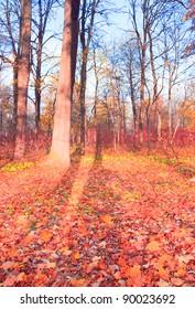 Natural Background Idyllic Nature