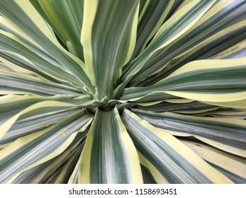 Natural background Images