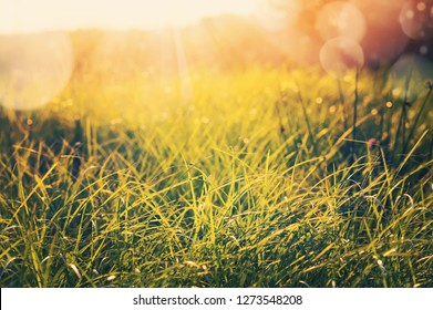 Natural background. Landscape with fresh green grass in the morning sun
