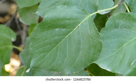 Natural background, leaves - Shutterstock ID 1266823786