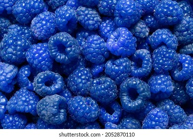 natural background of many ripe unusual blue fragrant raspberry berries, texture patter, blue raspberries as food background.