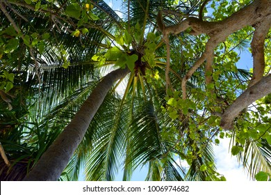 Natural background with palm tree