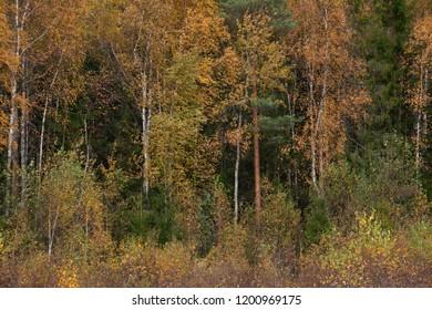 the natural background - Pushkin fall