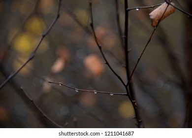 the natural background - rainy autumn day