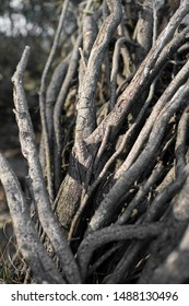 Natural Background of roots and branches