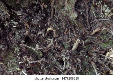 Natural Background from roots, branches, earth, leaves