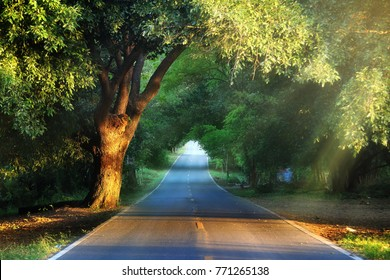 Natural background of route and journey amidst the big tree and beautiful nature