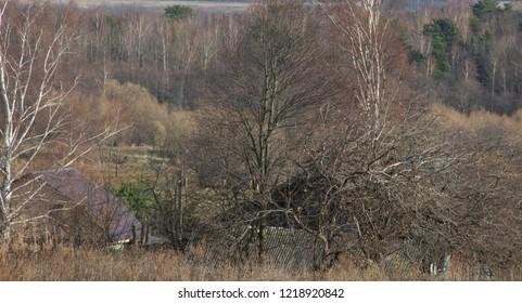 the natural background - rural landscape