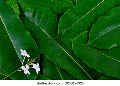 The natural background shows green, fresh leaves with a single white flower blooming on the left margin. These leaves with a prominent leaf texture and pattern for the benefit of product design etc.