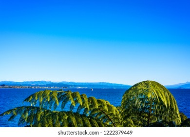 Natural background with silver fern branches over the water of lake Taupo with volcanic cones of Ruapehu towering at the horizon. Beautiful sunny day at North Island Volcanic Plateau, New Zealand