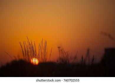 Natural background. Sunset sun through the bush