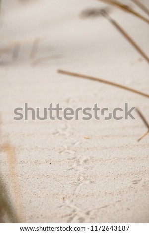 Natural background: traces of bird's foot on white sand. Tracking narrow traces of animals in the sand.