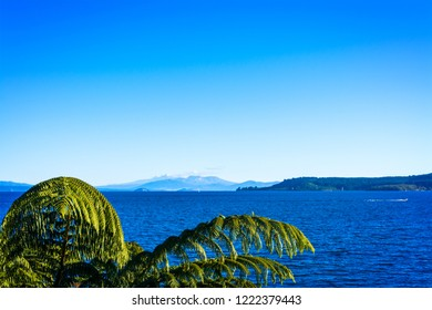 Natural background with tree fern branches above the water of lake Taupo and volcanic cones of Ruapehu towering over horizon. North Island Volcanic Plateau, New Zealand