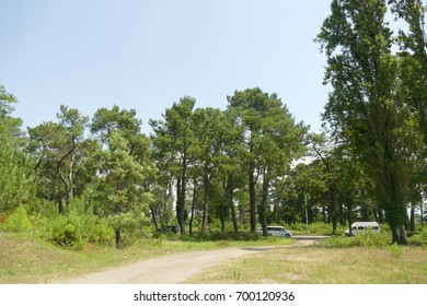 Natural background, trees