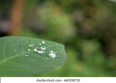 Natural background, water drops with blur background.