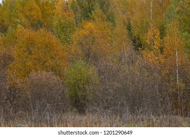the natural background - yellow outumn