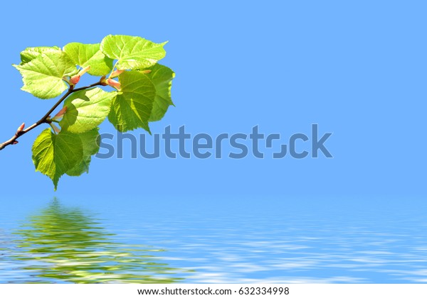 Natural background. Young green leaves. Spring landscape.