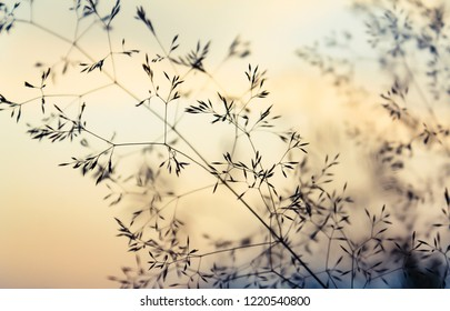 Natural Backgrounds - Delicate grasses at sunset