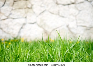 natural backgrounds.spring grass background.Summer meadow with green grass