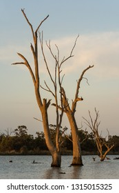 Natural Backwater setting on the River Murray South Australia, late evening nature background in portrait orientation. Colorful sky and clouds over ghost gums.